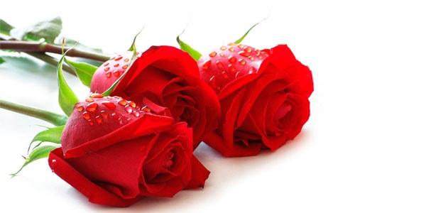 Неувядающие розы - прекрасный подарок на 8 марта